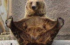 Медведица из финского зоопарка освоила йогу. ФОТО