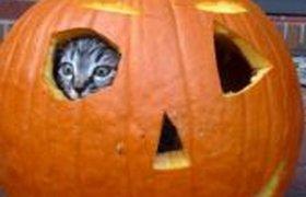 Домик для кошки после Хеллоуина