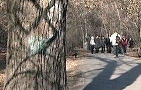 """Неизвестные расписали парк в Екатеринбурге свастиками и надписями """"Гитлер жив"""""""