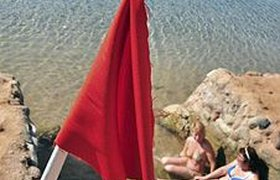 Туристов в Шарм-эль-Шейхе зовут на пляжи без акул. ВИДЕО