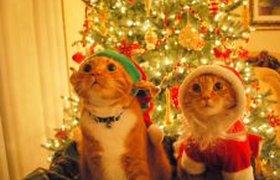 Деды морозы и кошки