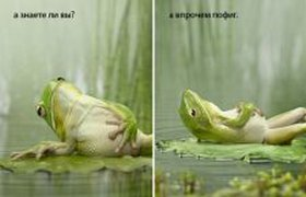 Жаба-пофигист