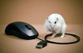 Мышка и мышка