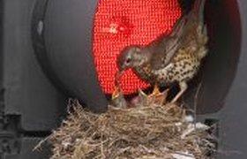 Гнездо в светофоре