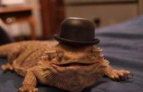 Здравствуйте, я ваша жаба!