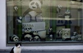 Панда-кошка