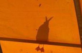 Тень зайца?