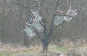 Дерево в тележках