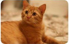 Кот и рулон бумаги