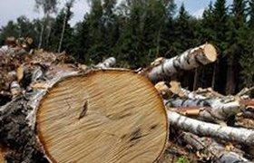 Задержка строительства трассы через Химкинский лес стоит 4 млрд рублей