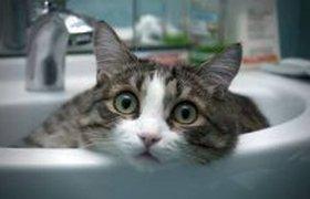 Смешные кошки и вода