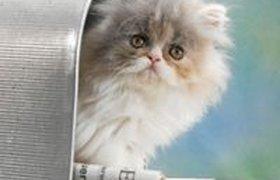 Доставка котиков, пиццы дронами и книг совами: как компании привлекают внимание к своим продуктам