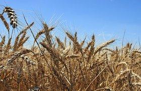 Тульский производитель био-зерна: мы получили выгоду от санкций и роста евро