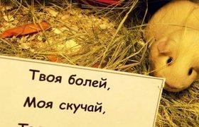"""Какие животные """"работают"""" в офисах российских компаний. ФОТО"""