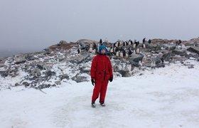 Как топ-менеджер КРОК ездила в Антарктиду