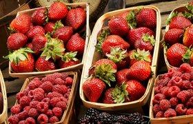 Как врач из Перми занялся производством джемов из русских ягод