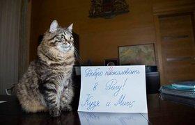 Мэр Риги представил рекламную кампанию с котами для привлечения российских туристов