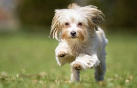 Самые дорогие собаки в мире. ФОТО