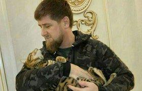 Кремль прокомментировал возможный уход Кадырова с поста главы Чечни