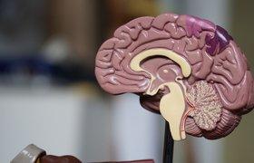 Семь видео, чтобы понять наш мозг