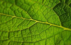 Жизнь микроорганизмов: три главных вывода из Рейтинга BioTech