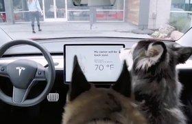 Водитель Tesla обнаружил опасный для собак сбой в работе электрокара