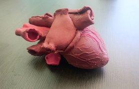 Российский сервис 3D-печати создал прототип человеческого сердца