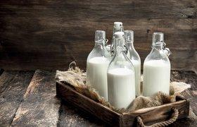 Отказаться от хорошей работы и завести корову: история стартапа Puresh Daily