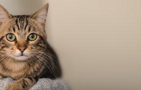 Сервис «Собака-гуляка» запустил проект для кошек «Цап-царап»
