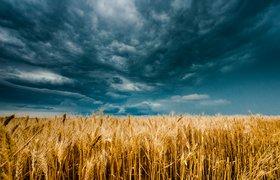 Страхование урожая от непогоды и безопасность путешествий в эпоху COVID-19: блокчейн-дайджест