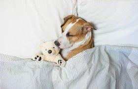 Сон по науке: сколько нужно спать, чтобы наконец выспаться