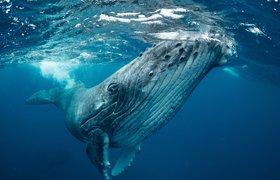 Спасти китов: воронежский проект Save Whales одержал победу на Webby Awards