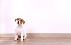 Новый тренд — интерьер для животных. Он помогает ветклиникам снижать стресс пациентов