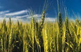«Россельхозбанк» запускает агротех-акселератор в формате конкурса студенческих стартапов