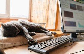 Slack выяснил, что сотрудники ценят в удаленной работе и чего им не хватает