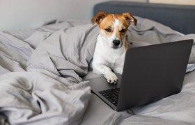 Роскачество назвало востребованные онлайн-профессии для фрилансеров