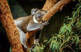 Искусственный интеллект для оценки популяции коал и влияние COVID на AR/VR: TechTrends-дайджест