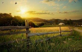 Цифровая перезагрузка: пять шагов, которые решат проблемы фермеров