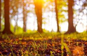 День эколога: как российские компании помогают оберегать окружающую среду