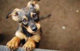 Сбербанк запустит страхование животных в 2020 году