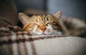 «Аэрофлот» лишил бонусных миль пассажира с толстым котом