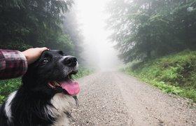 Запущен бесплатный сервис по выгулу собак для пенсионеров