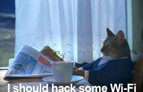 Американский кот взломал Wi-Fi соседей