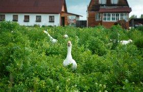 Агрегатор агрохозяйств запустил прямые эфиры с ферм с промокодами на покупку