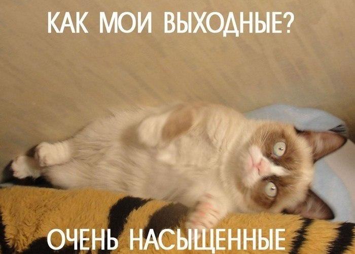 Grumpy Cat стала настоящим мемом