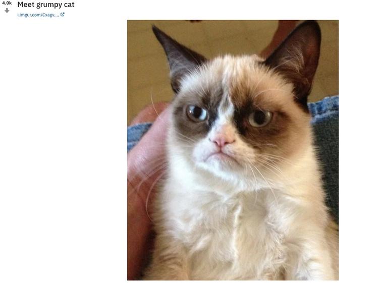 Фото необычайно хмурого животного впервые появились на Reddit