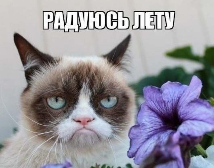 В России также активно делали мемы с Grumpy Cat