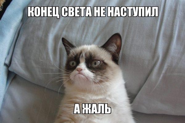 Grumpy Cat была любимицей пользователей по всему миру