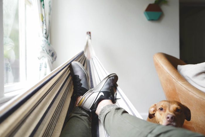 мужчина в гамаке, собака